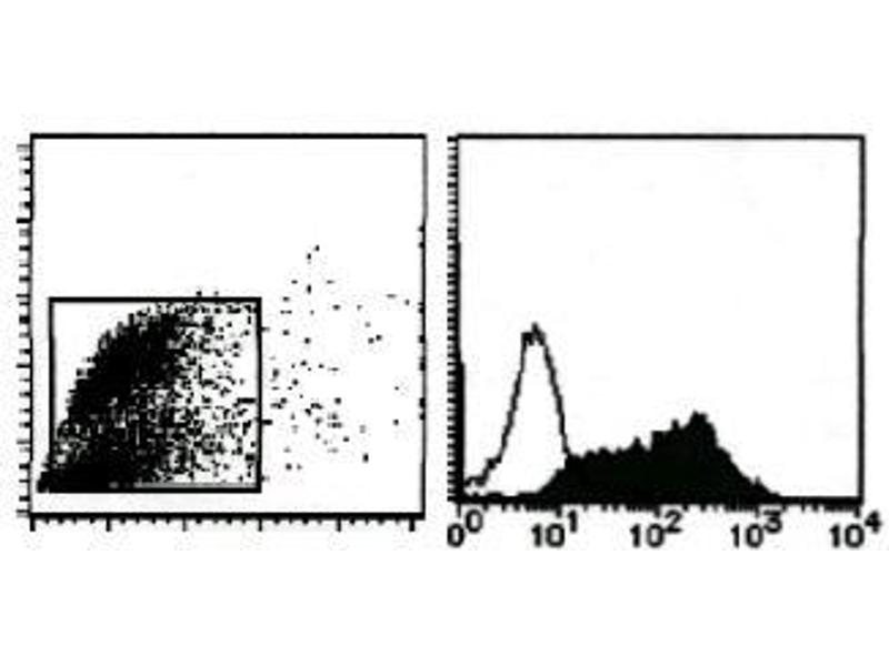 Flow Cytometry (FACS) image for anti-Milk Fat Globule-EGF Factor 8 Protein (MFGE8) antibody (ABIN1449192)