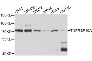 Image no. 1 for anti-Drought-Repressed 4 Protein (DR4) antibody (ABIN6570322)