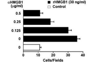 Image no. 1 for anti-High Mobility Group Box 1 (HMGB1) antibody (ABIN1176834)