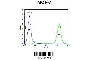 Image no. 1 for anti-CTD (Carboxy-Terminal Domain, RNA Polymerase II, Polypeptide A) Small Phosphatase Like 2 (CTDSPL2) (AA 52-80), (N-Term) antibody (ABIN654892)