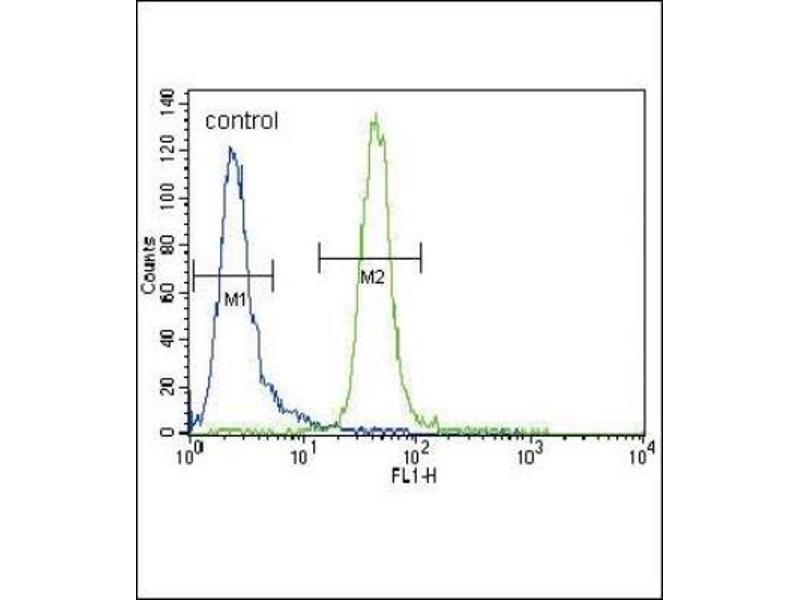 Flow Cytometry (FACS) image for anti-MUSK antibody (Muscle, Skeletal, Receptor Tyrosine Kinase) (N-Term) (ABIN4336820)