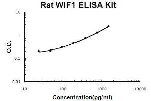 Image no. 1 for WNT Inhibitory Factor 1 (WIF1) ELISA Kit (ABIN5510721)