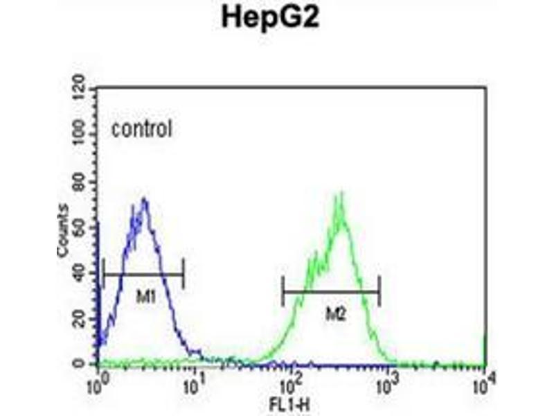 Flow Cytometry (FACS) image for anti-MAP4K3 antibody (Mitogen-Activated Protein Kinase Kinase Kinase Kinase 3) (ABIN953301)
