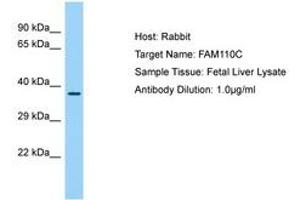 Image no. 1 for anti-Family with Sequence Similarity 110, Member C (FAM110C) (AA 98-147) antibody (ABIN6750195)