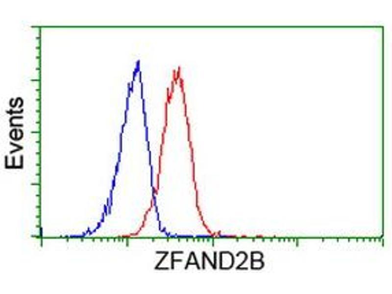 Image no. 4 for anti-Zinc Finger, AN1-Type Domain 2B (ZFAND2B) antibody (ABIN1501806)