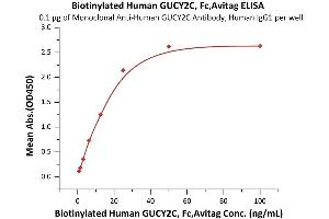 Image no. 3 for Guanylate Cyclase 2C (Heat Stable Enterotoxin Receptor) (GUCY2C) (AA 24-430) (Active) protein (Fc Tag,AVI tag,Biotin) (ABIN6973083)