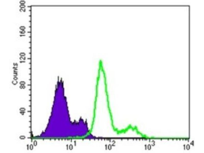 Flow Cytometry (FACS) image for anti-3-phosphoinositide Dependent Protein Kinase-1 (PDPK1) antibody (ABIN4344574)