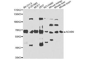 Image no. 1 for anti-Acyl-CoA Dehydrogenase Family, Member 9 (ACAD9) antibody (ABIN6136396)