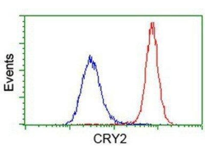 Flow Cytometry (FACS) image for anti-Cryptochrome 2 (Photolyase-Like) (CRY2) antibody (ABIN4300636)