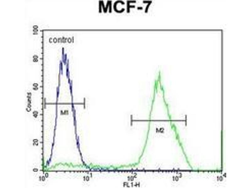 Flow Cytometry (FACS) image for anti-MBD3L3 antibody (Methyl-CpG Binding Domain Protein 3-Like 3) (AA 163-192) (ABIN953335)