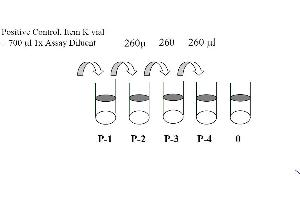 Image no. 1 for Signal Transducer and Activator of Transcription 1, 91kDa (STAT1) ELISA Kit (ABIN625244)