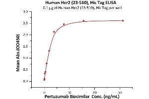 Image no. 3 for Receptor tyrosine-protein kinase erbB-2 (ErbB2/Her2) (AA 23-510) (Active) protein (His tag) (ABIN7013682)