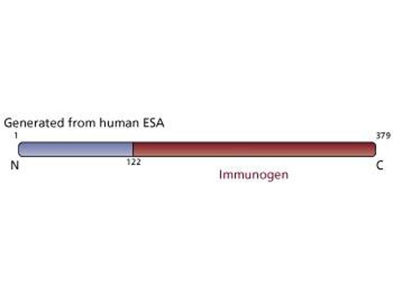 image for anti-Flotillin 2 antibody (FLOT2) (AA 122-379) (ABIN967933)