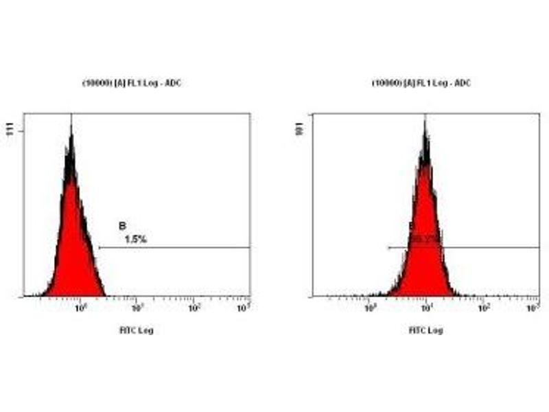 Flow Cytometry (FACS) image for anti-Microtubule-Associated Protein 1 Light Chain 3 beta (MAP1LC3B) (N-Term) antibody (ABIN153145)