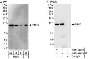 Western Blotting (WB) image for anti-MAPK7 antibody (Mitogen-Activated Protein Kinase 7) (AA 766-816) (ABIN446048)