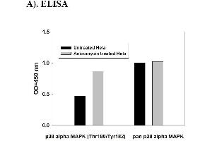Image no. 4 for Mitogen-Activated Protein Kinase 14 (MAPK14) ELISA Kit (ABIN625229)
