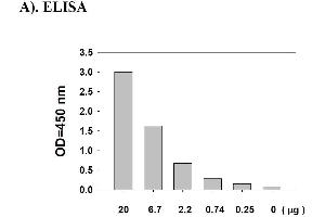 Image no. 6 for Signal Transducer and Activator of Transcription 1, 91kDa (STAT1) ELISA Kit (ABIN625231)