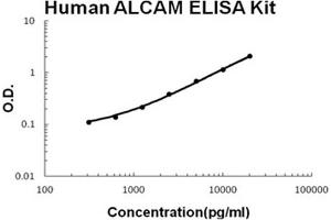 Image no. 1 for Activated Leukocyte Cell Adhesion Molecule (ALCAM) ELISA Kit (ABIN6719924)