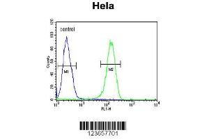 Image no. 1 for anti-Adenylate Cyclase 4 (ADCY4) (AA 415-441), (Center) antibody (ABIN653832)