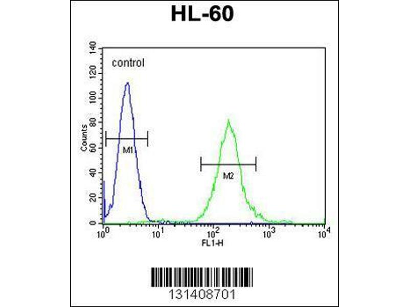Flow Cytometry (FACS) image for anti-Son of Sevenless Homolog 2 (Drosophila) (SOS2) (AA 188-215), (N-Term) antibody (ABIN655707)