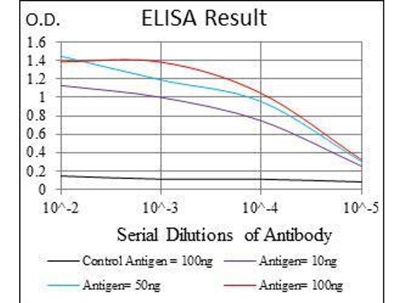 ELISA image for anti-Glucose-6-Phosphate Dehydrogenase (G6PD) antibody (ABIN4880305)