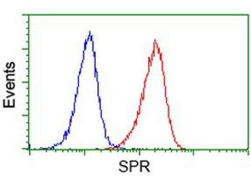 image for anti-Sepiapterin Reductase (SPR) antibody (ABIN1501111)