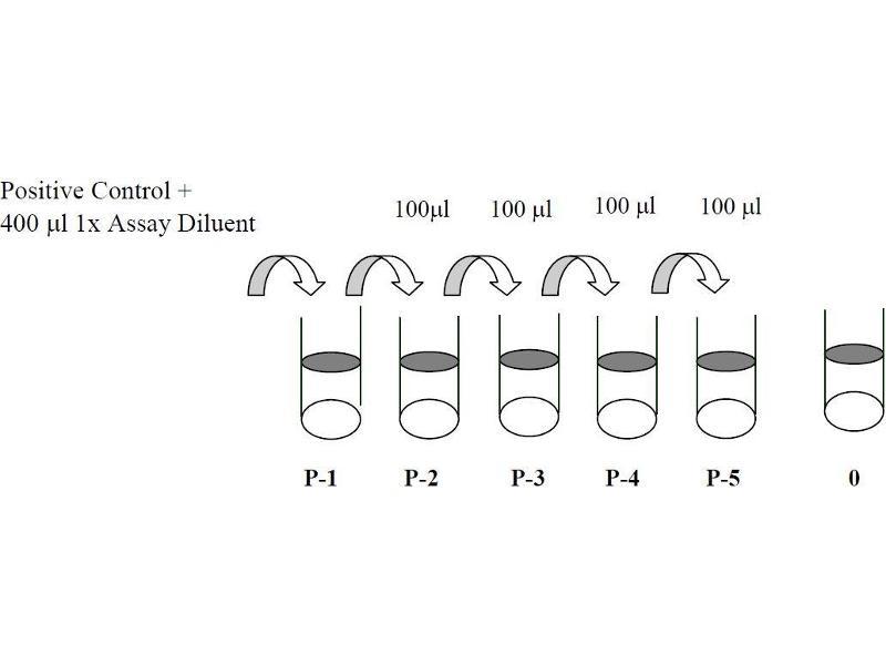 image for EPH Receptor B3 (EPHB3) ELISA Kit (ABIN1981719)