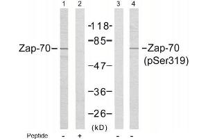 image for anti-ZAP70 antibody (zeta-Chain (TCR) Associated Protein Kinase 70kDa) (pTyr319) (ABIN196885)