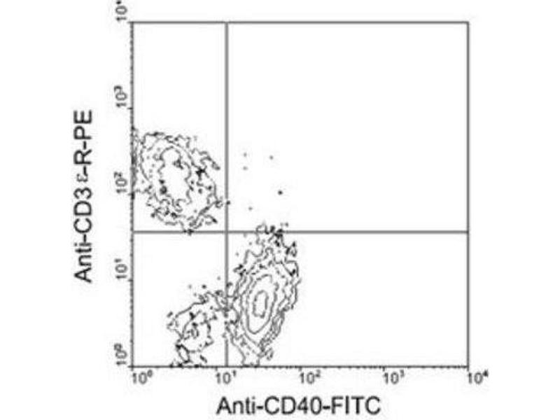 Flow Cytometry (FACS) image for anti-CD40 antibody (CD40 Molecule, TNF Receptor Superfamily Member 5) (ABIN439951)