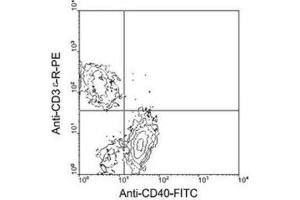 Flow Cytometry (FACS) image for anti-CD40 Molecule, TNF Receptor Superfamily Member 5 (CD40) antibody (ABIN439951)