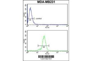 Flow Cytometry (FACS) image for anti-IL12 antibody (Interleukin 12) (ABIN652878)
