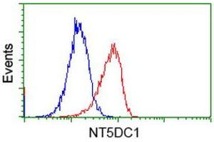 Image no. 3 for anti-5'-Nucleotidase Domain Containing 1 (NT5DC1) antibody (ABIN1499837)