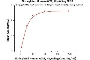 Image no. 4 for Angiotensin I Converting Enzyme 2 (ACE2) (AA 18-740) protein (AVI tag,Biotin,His tag) (ABIN6952431)