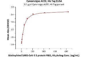 Image no. 2 for Angiotensin I Converting Enzyme 2 (ACE2) protein (His tag) (ABIN6952617)