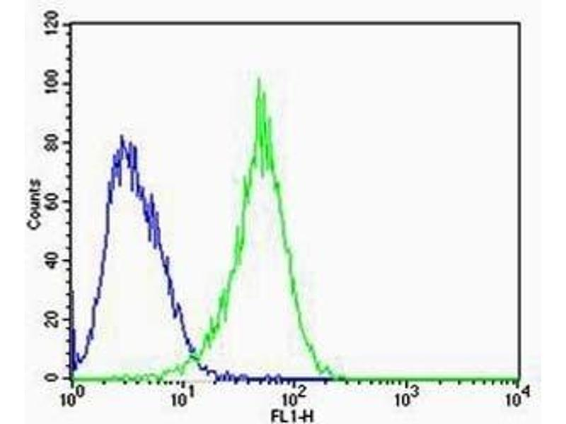Flow Cytometry (FACS) image for anti-RAC1 antibody (ABIN3032428)