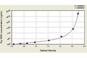 Image no. 1 for Carboxypeptidase B1 (Tissue) (CPB1) ELISA Kit (ABIN829372)
