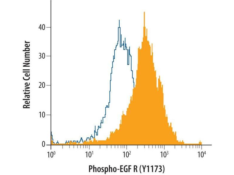 Flow Cytometry (FACS) image for anti-Epidermal Growth Factor Receptor (EGFR) (pTyr1173) antibody (ABIN4900628)