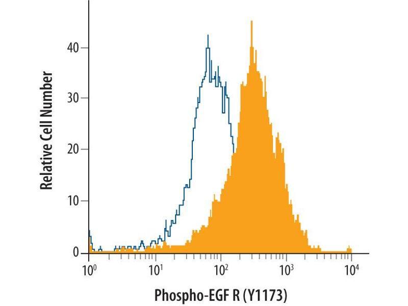 Flow Cytometry (FACS) image for anti-EGFR antibody (Epidermal Growth Factor Receptor) (pTyr1173) (ABIN4900628)