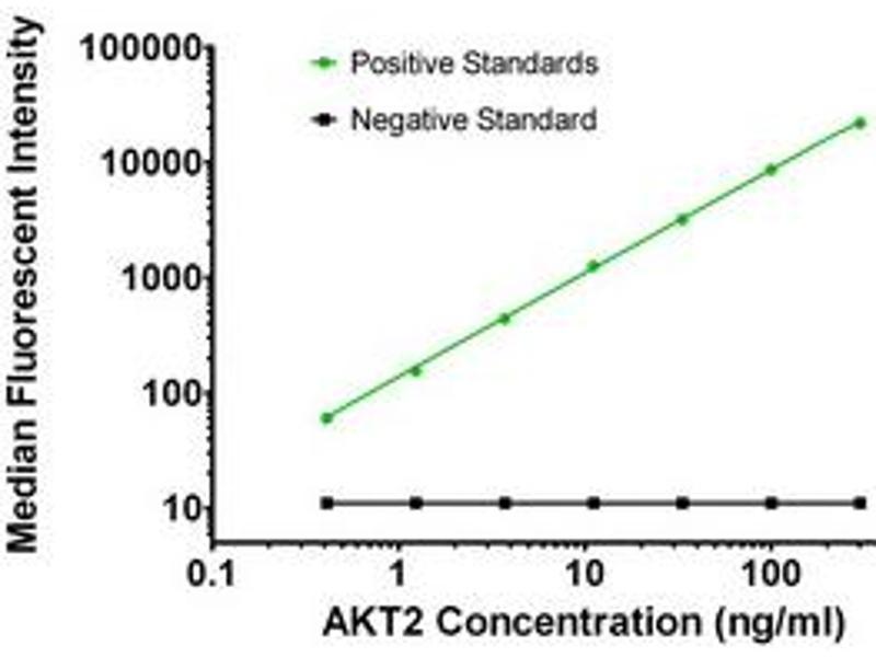 Luminex Assay (LMNX) image for anti-V-Akt Murine Thymoma Viral Oncogene Homolog 2 (AKT2) antibody (ABIN2671838)