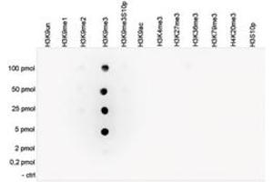 Image no. 1 for anti-Histone Cluster 1, H3a (HIST1H3A) (3meLys9) antibody (ABIN5773866)
