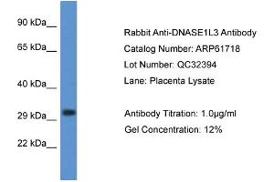 Image no. 1 for anti-Deoxyribonuclease I-Like 3 (DNASE1L3) (C-Term) antibody (ABIN2788880)