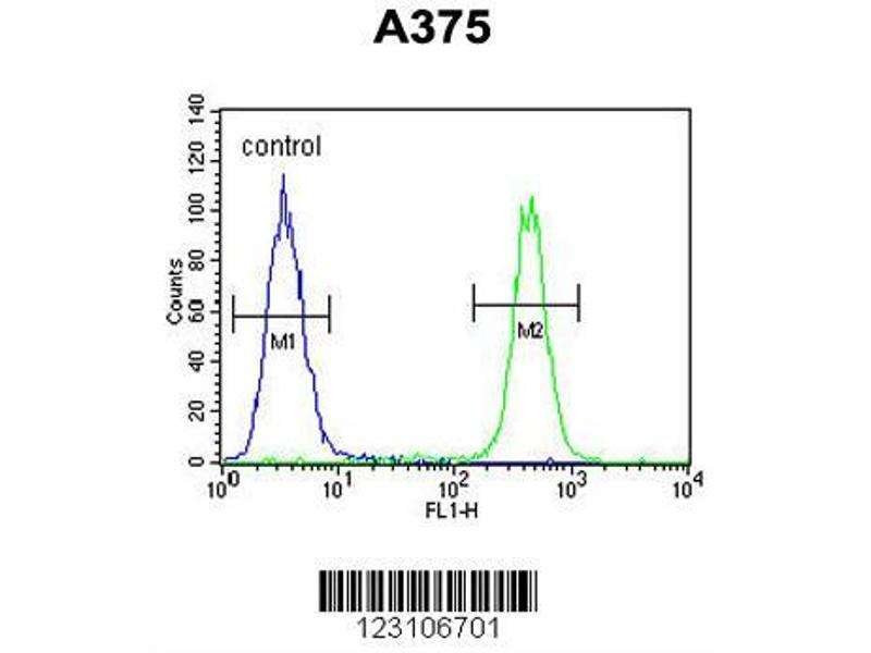 Flow Cytometry (FACS) image for anti-Chromosome 6 Open Reading Frame 170 (C6ORF170) (AA 112-139), (N-Term) antibody (ABIN652966)
