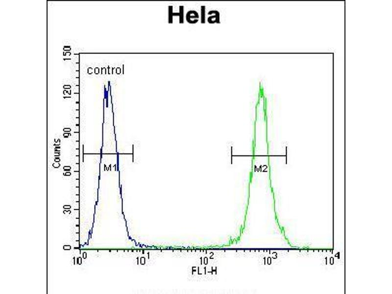 Image no. 1 for anti-TNFRSF1A-Associated Via Death Domain (TRADD) (AA 126-151) antibody (ABIN5534758)