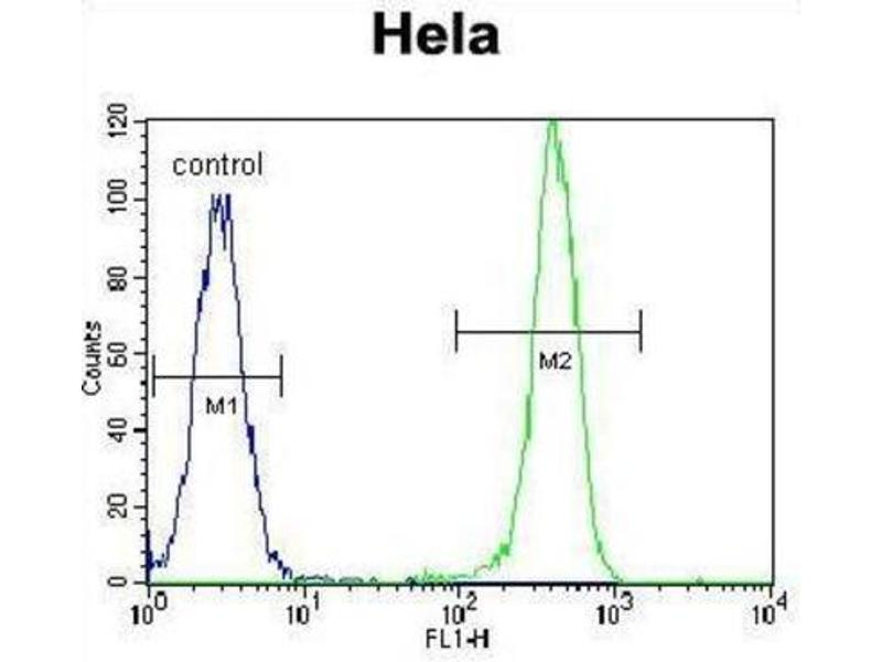 Flow Cytometry (FACS) image for anti-Erythropoietin Receptor (EPOR) antibody (ABIN2998915)