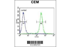 Image no. 3 for anti-Myeloid Cell Nuclear Differentiation Antigen (MNDA) (AA 26-53), (N-Term) antibody (ABIN655190)