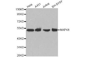 Western Blotting (WB) image for anti-Mitogen-Activated Protein Kinase 8 (MAPK8) antibody (ABIN1882299)