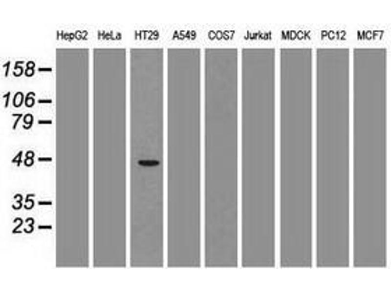 image for anti-GATA Binding Protein 4 (GATA4) (AA 296-442) antibody (ABIN1491352)