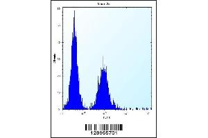 Image no. 2 for anti-Zinc Finger CCCH-Type Containing 8 (ZC3H8) (AA 52-81), (N-Term) antibody (ABIN5535166)