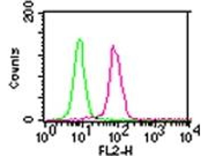 Flow Cytometry (FACS) image for anti-CHUK antibody (conserved Helix-Loop-Helix Ubiquitous Kinase) (ABIN567903)
