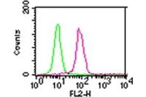anti-conserved Helix-Loop-Helix Ubiquitous Kinase (CHUK) antibody (3)